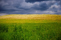Green field with clouds above