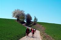 leisure / hobby / sports, Nordic Walking, wanderer in Muehlviertel, Upper Austria, Europe, field road, hiking, endurance sports, people,