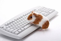 Hamster with computer keyboard