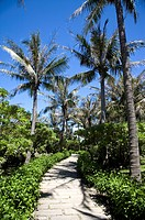 A pathway with coconut palm trees and bushes