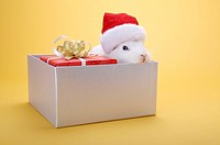 A wrapped gift and a rabbit with Santa hat in a box