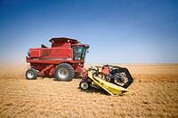 Side view of combine in field of lentils, Saskatchewan