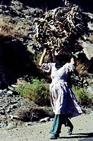 Taiz Yemen Woman Carrying Dried Cacti For Fuel