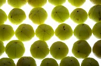 GOOSEBERRIES IN BACKLIGHT