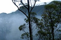 MISTY KANNAN DEVAN HILLS OF THE HIGH RANGES IN IDUKKI DIST