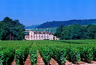 Aloxe_Corton Near Mersault France Grande Bourgogne Vineyards Chateau de Corton_Andre