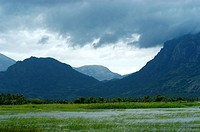 RURAL LANDSCAPE OF KANYAKUMARI DISTRICT OF SOUTHERN TAMIL NADU