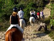 Horse hike beach