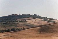 Crop in the field, Pienza, Val D´Orcia, Tuscany, Italy