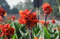 Close_up of flowers in a formal garden, Mughal Garden, Rashtrapati Bhavan, New Delhi, India