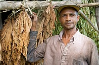 Dominican Republic _ Centre _ The Cibao _ Tobacco Valley _ Plantation _ Drying leaves