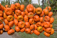 Dominican Republic _ Fruits