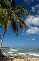 Dominican Republic _ North Coast _ Samana Peninsula _ Las Terrenas _ Playa Las Ballenas