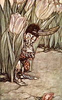 When he heard Peter´s voice he popped in alarm behind a tulip  Coloured illustration by Arthur Rackham from the book Peter Pan in Kensington Gardens b...