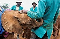 Sheldrick Elephant orpancy