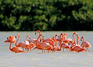 Flamingos Mexico
