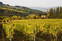 Vineyards, Chianti, Tuscany, Italy