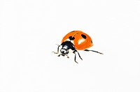 Bug on white background close_up