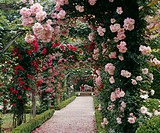 Pathway in garden with arches covered with flowers