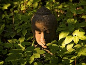 Lake of the Woods, Ontario, Canada, Buddha statue amongst plants