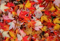 Colorful of autumn leaves