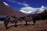 Native ponies with mountain range in background