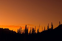 Clear orange mountain sunset with pine silhouettes