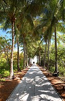 A deserted alley and palm trees at Bill Baggs State Park, Key Biscayne, Miami, Florida, USA