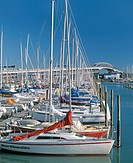 Yachts in Westhaven marina Harbour Bridge beyond Auckland New Zealand