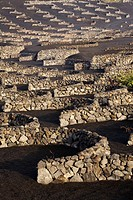Fields of vineyards in the volcanic soil of La Geria  Yaiza  Lanzarote  Las Palmas province  Canary Islands  Spain