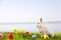 bunny, easter eggs in grass