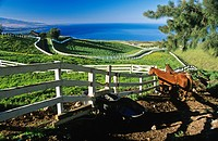 Horses behind wooden fence, Hawaii, USA