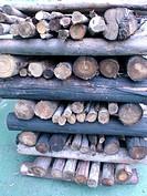 Firewood, São Paulo, Brazil
