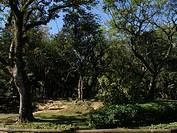 Nature, Ibirapuera Park, São Paulo, Brazil