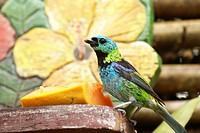 Bird, São Paulo, Brazil