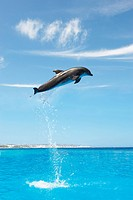 Dolphin jumping out of the sea. Digital composite.