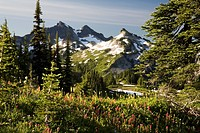 Paradise Park, Tatoosh Mountains, Mt Rainier National Park, Washington State, USA
