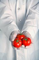 Person in lab coat holds three tomatoes