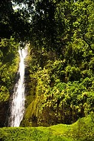 Waterfall in a forest, Papeete, Tahiti, French Polynesia
