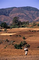 Ethiopia, the Rift valley, the landscape in the surroundings of Dorze in the Guge Mountains