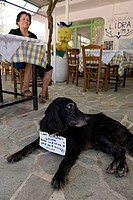 Greece, Ionian Islands, Zante Island Zakynthos, a tavern in the mountains around Anafonitria