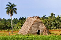 Cuba, Vinales, tobacco dryer