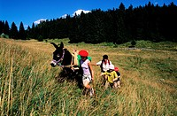 France, Jura, les Moussieres, a hiking with family on donkey