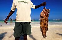 Tanzania, Zanzibar Archipelago, Unguja island Zanzibar, Matemwe, fishermen coming back