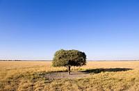 Botswana, Central Kalahari Game Reserve