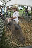 Teenage girl in pen with Sandy Black Oxford pig, Suffolk Smallholders annual show, Stonham Barns, Suffolk, England, July 2008