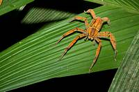 Tropical spider  Photographed in Costa Rica
