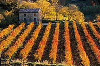 France, Var, Provence Verte Green Provence, Landscape near Cotignac