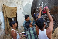 Painting elephant for the Elephant Festival, Jaipur, Rajasthan, India