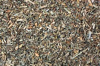 medicinal plant Viola arvensis, field pansy, dried herb